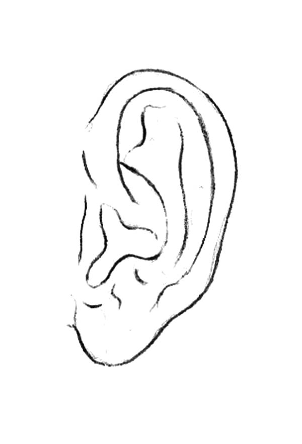 Ear, : Catching Sound with Ear Coloring Pages