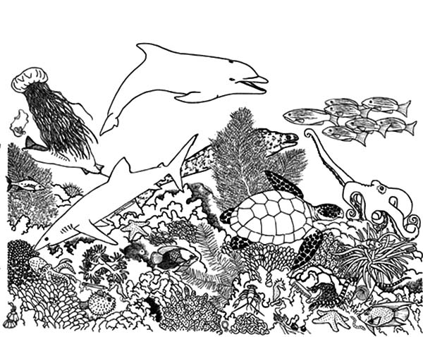 Complex Coral Reef Ecosystem Fish Coloring Pages : Kids Play Color