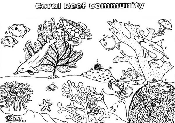 - Coral Reef Fish Community Coloring Pages : Kids Play Color