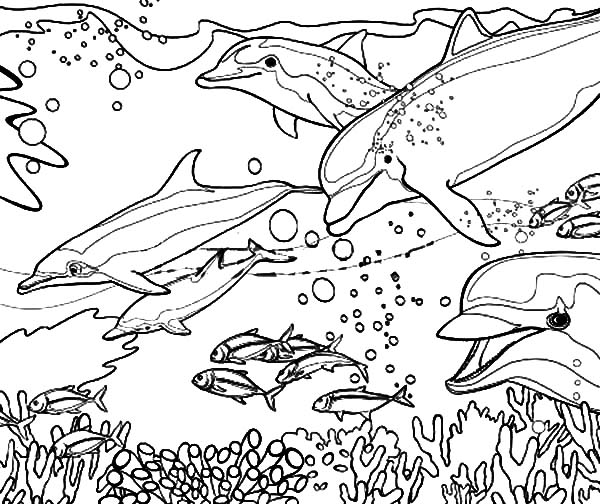 Coral Reef Fish, : Coral Reef Fish Dolphin Coloring Pages