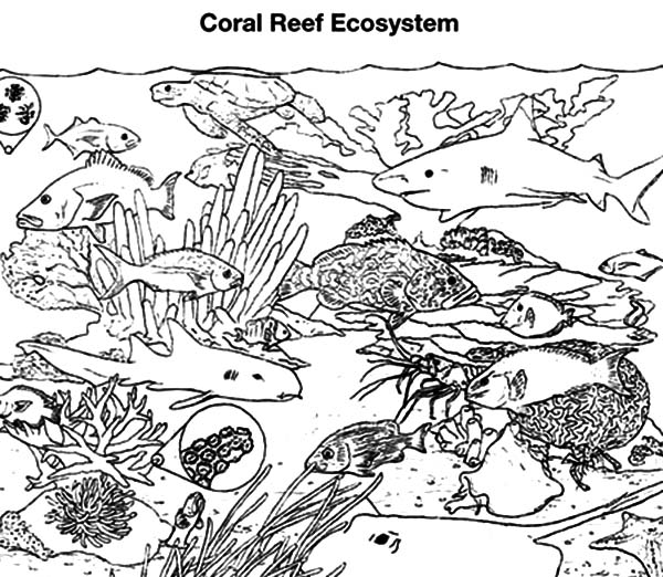 Coral Reef Fish, : Coral Reef Fish Gathering Coloring Pages