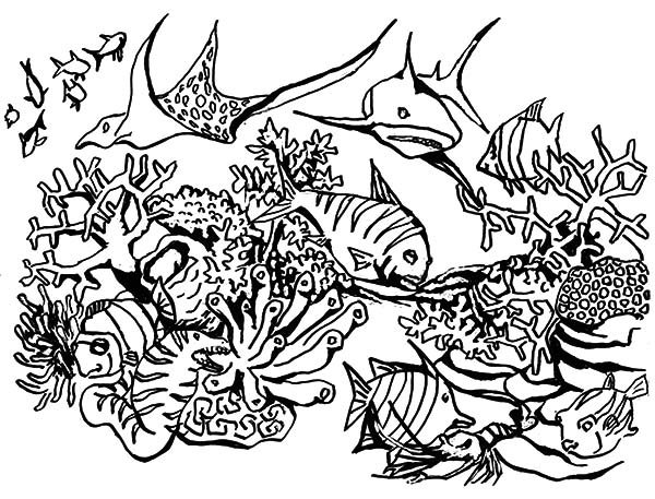 Coral Reef Fish, : Coral Reef Fish Predators Gathering Coloring Pages