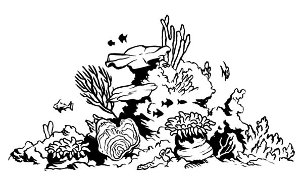 Coral Reef Fish, : Coral Reef Fish Tank Coloring Pages