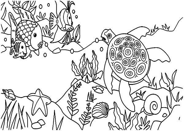 Coral Reef Fish, : Coral Reef Fish and Sea Turtle Coloring Pages