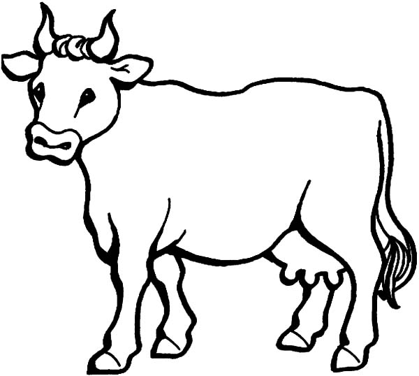 Cows, : Cows Coloring Pages for Kids