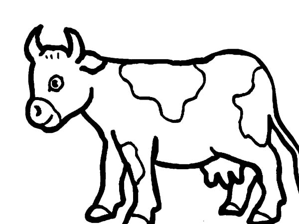 Cows, : Cows Picture Coloring Pages