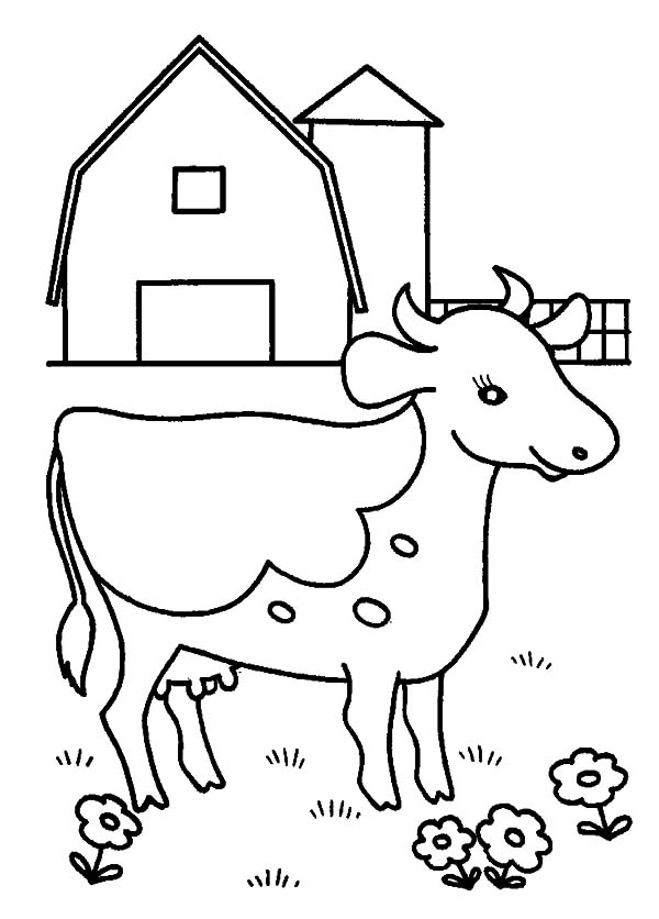 Cows, : Cows at Barn Yard Coloring Pages