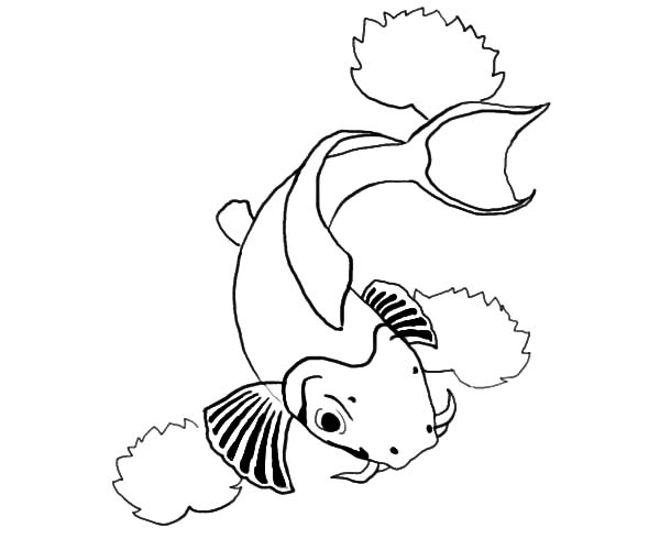 Coy Fish, : Coy Fish Outline Coloring Pages