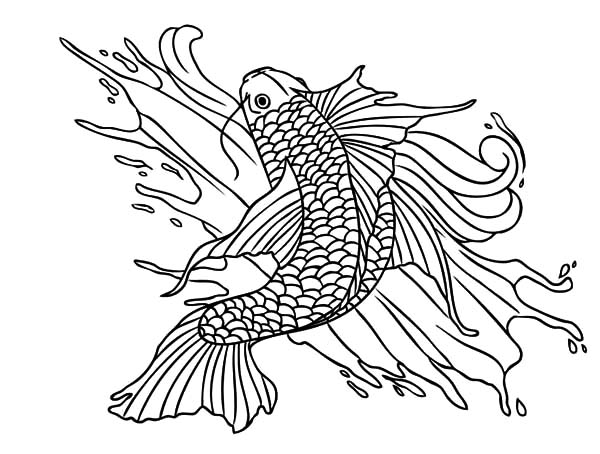 Coy Fish, : Coy Fish Painting Coloring Pages