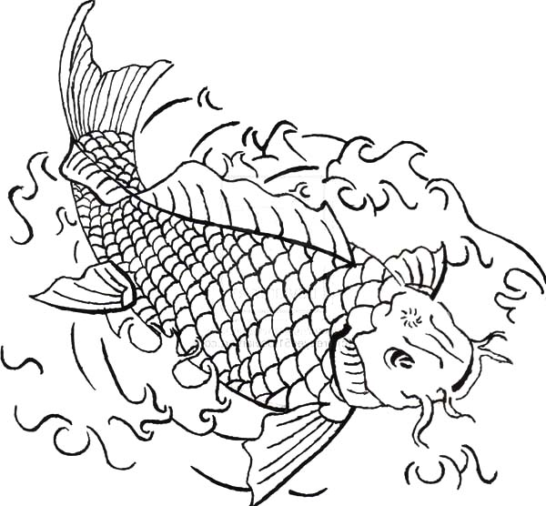 Coy Fish, : Coy Fish on Canvas Coloring Pages