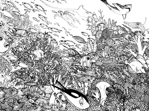 Coral Reef Fish, : Crowded Fish and Animals in Coral Reef Ecosystem Coloring Pages