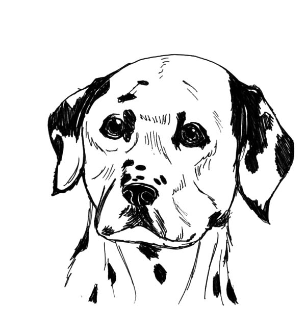 Fire Dog, : Dalmatian Fire Dog Coloring Pages