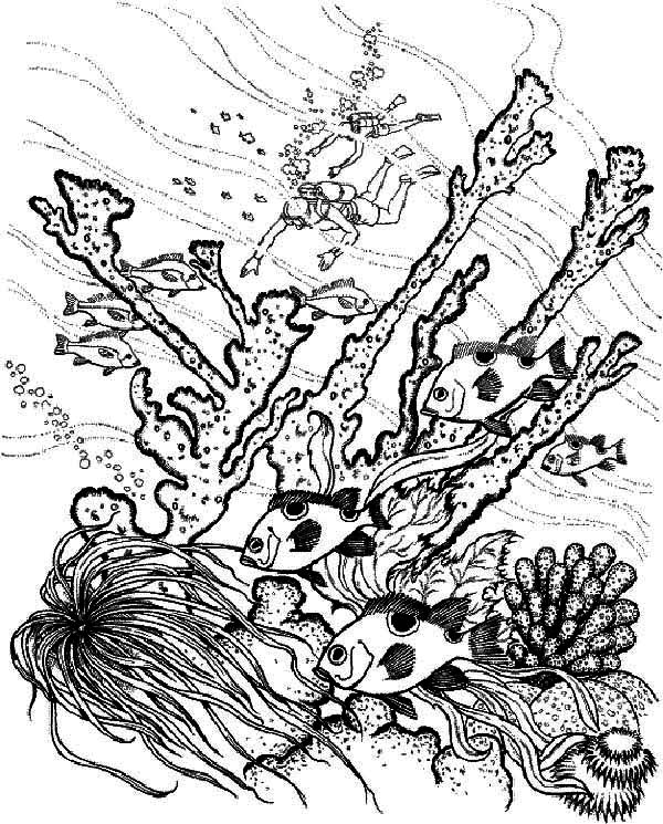 Coral Reef Fish, : Diver Find Coral Reef Fish Coloring Pages