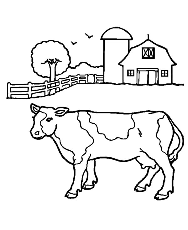 Cows, : Farmers Cows Coloring Pages