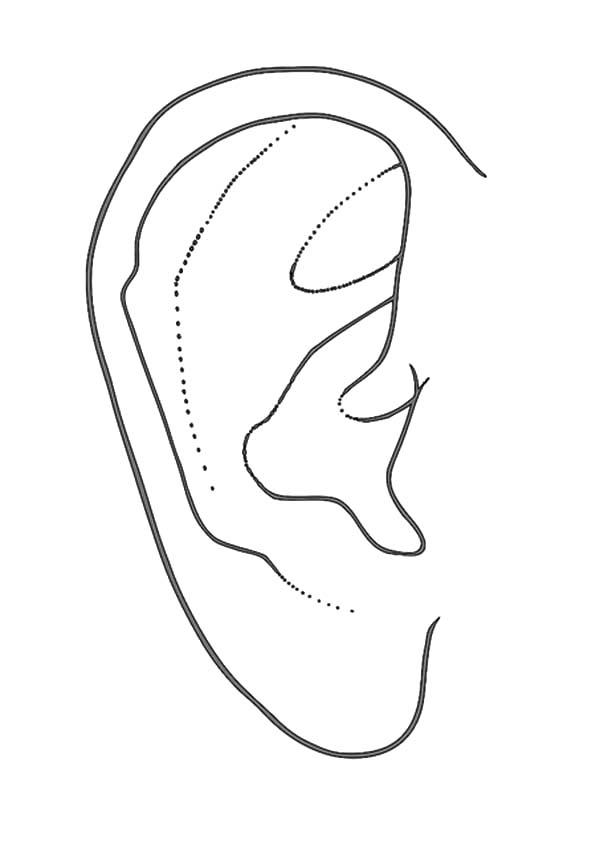 Ear, : Healthy Ear Coloring Pages