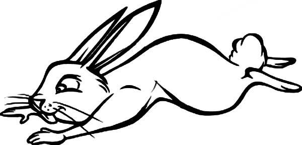 Hopping Bunny, : Hopping Bunny Catch Something Coloring Pages