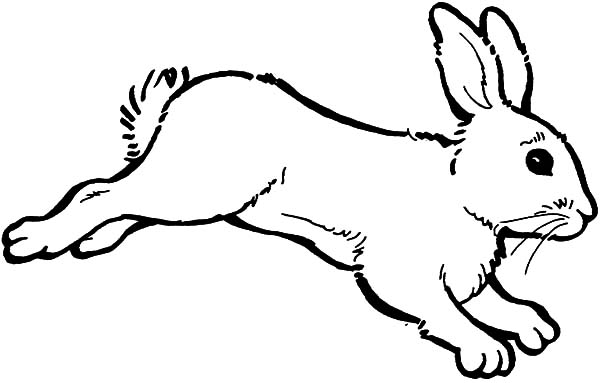 Hopping Bunny, : Hopping Bunny Coloring Pages for Kids
