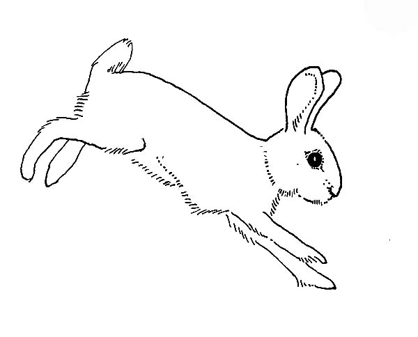 Hopping Bunny, : Hopping Bunny Landed on the Ground Coloring Pages