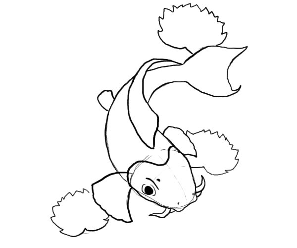 Coy Fish, : How to Draw Coy Fish Coloring Pages
