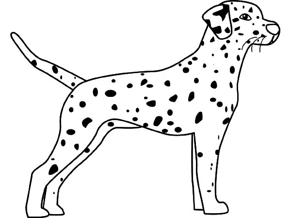 Fire Dog, : How to Draw Dalmation Fire Dog Coloring Pages