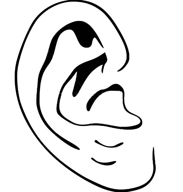Ear, : Introducing Ear to Kindergarten Kids Coloring Pages