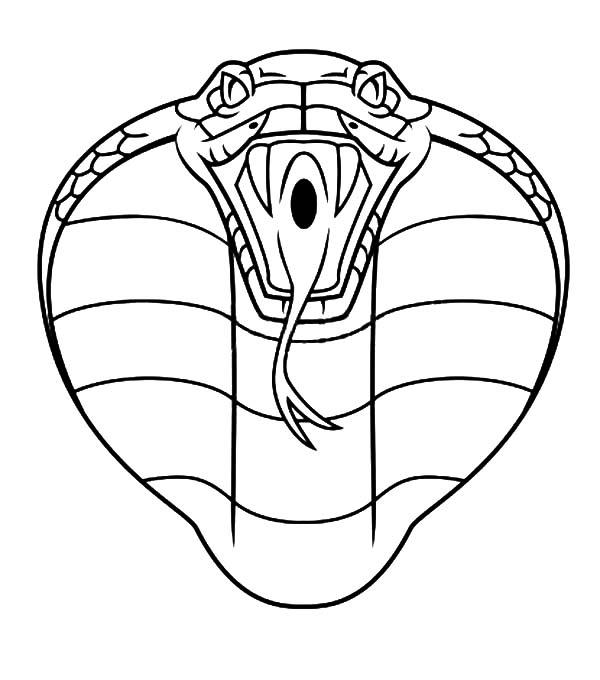 King Cobra, : King Cobra Head Coloring Pages