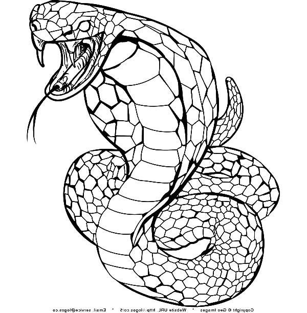 King Cobra, : King Cobra Spurt Poison Coloring Pages
