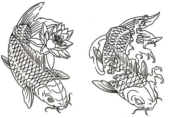 Coy Fish, : Lotus and Twin Coy Fish Coloring Pages