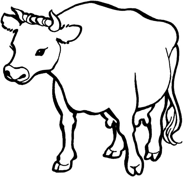 Cows, : Mother of Cows Coloring Pages