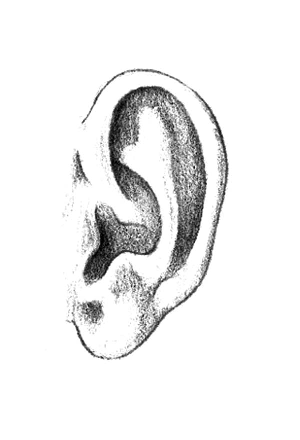 Ear, : Pencil Sketch Ear Coloring Pages
