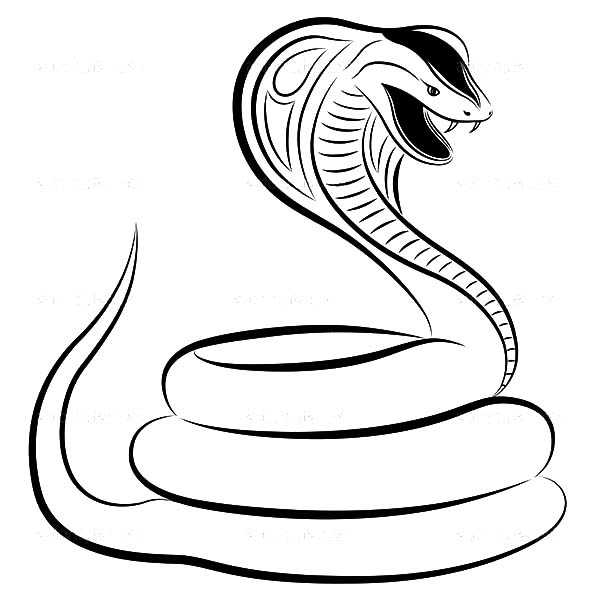 King Cobra, : Wild Life King Cobra Coloring Pages
